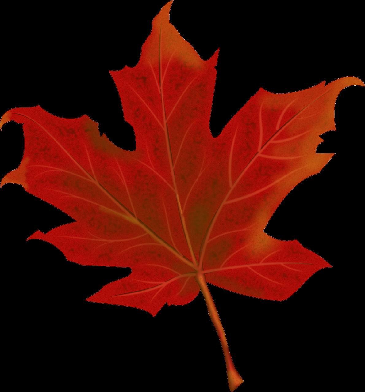 liść,jesień,jesienne liście,spadek,czerwony,pora roku,odchodzi,klon,październik,listowie,jesienny,Kanada,Natura,drzewo,spadek liści,jesienne liście,powalać drzewa,darmowa grafika wektorowa